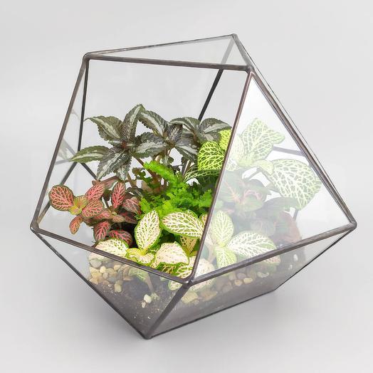Разнообразие в кубооктаэдре