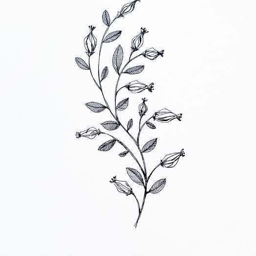 Ботаническая графика