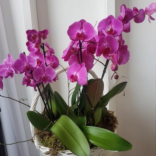 Корзина с пятью Орхидеями: букеты цветов на заказ Flowwow