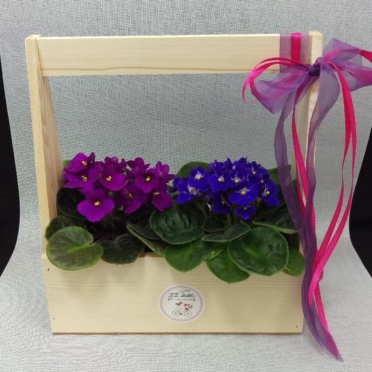 Милые фиалки: букеты цветов на заказ Flowwow