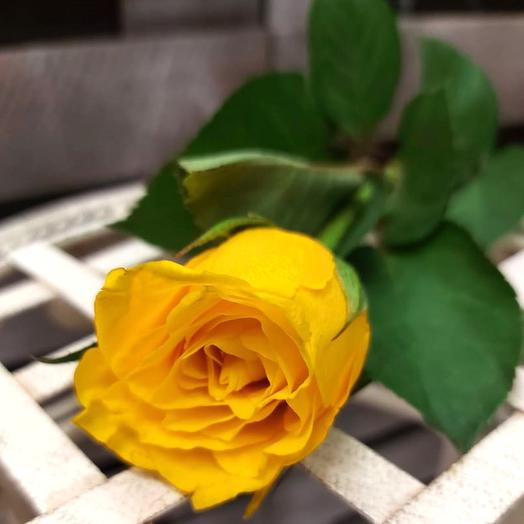 Желтые розы 45 см поштучно