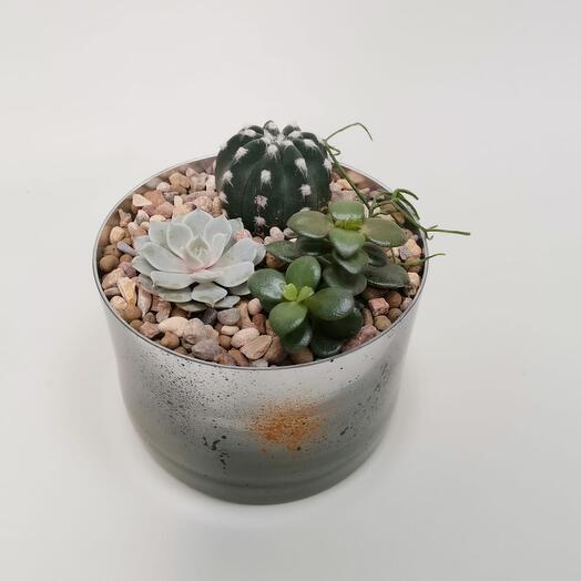Садик из кактусов. Композиция в стекле 3