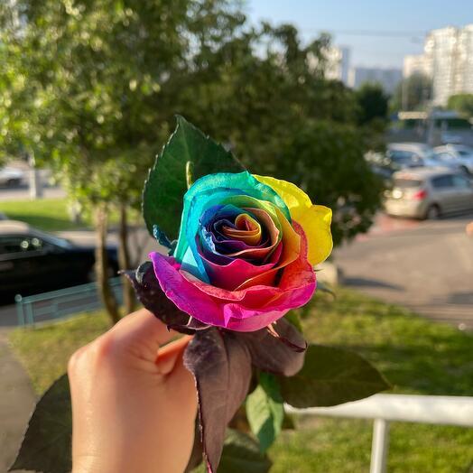Роза Эквадор RAINBOW