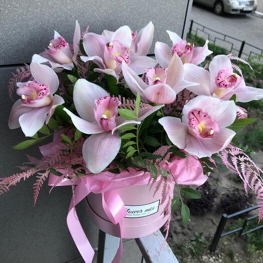 Орхидеи Нежность