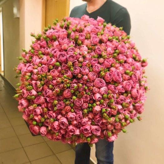 101 пионовидная роза Мисти Баблс