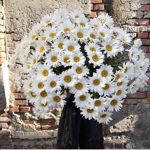 Ромашки : букеты цветов на заказ Flowwow