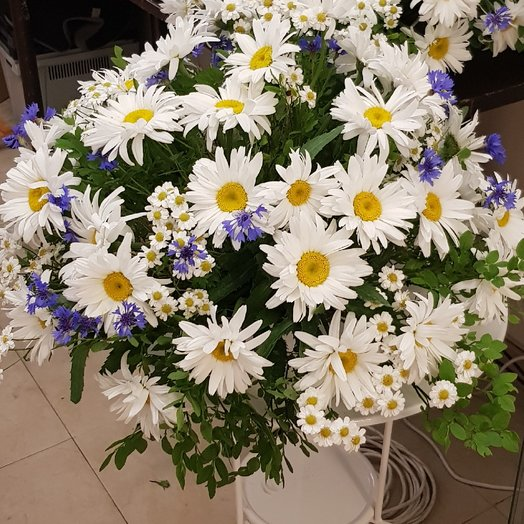 Васильки ромашки: букеты цветов на заказ Flowwow