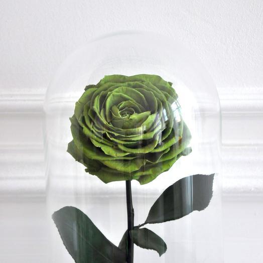 GREEN, ЗЕЛЕНАЯ РОЗА В КОЛБЕ PREMIUM: букеты цветов на заказ Flowwow
