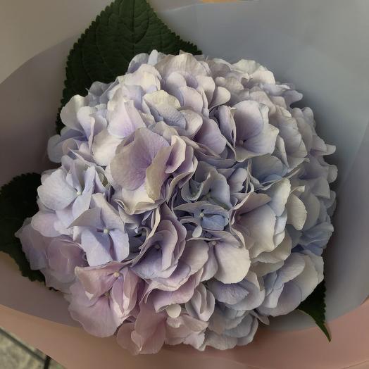 Моно букет из пышной гортензии: букеты цветов на заказ Flowwow