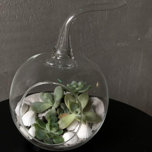 Флорариум «Яблоко с ракушками»: букеты цветов на заказ Flowwow