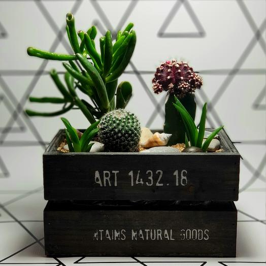 Ящик с суккулентами: букеты цветов на заказ Flowwow