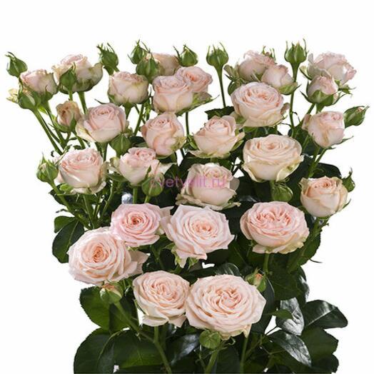 Роза кустовая Бомбастик