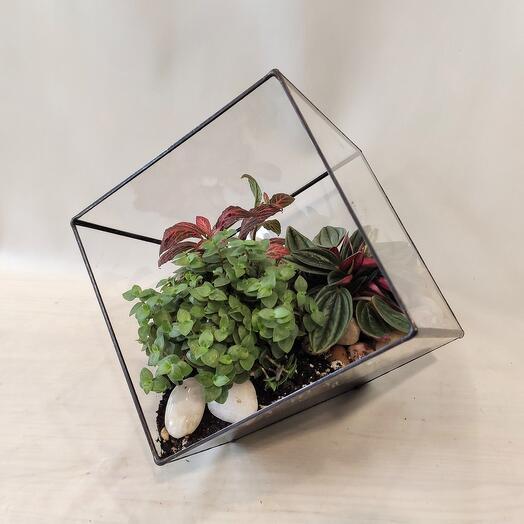 Оранжерея в кубе