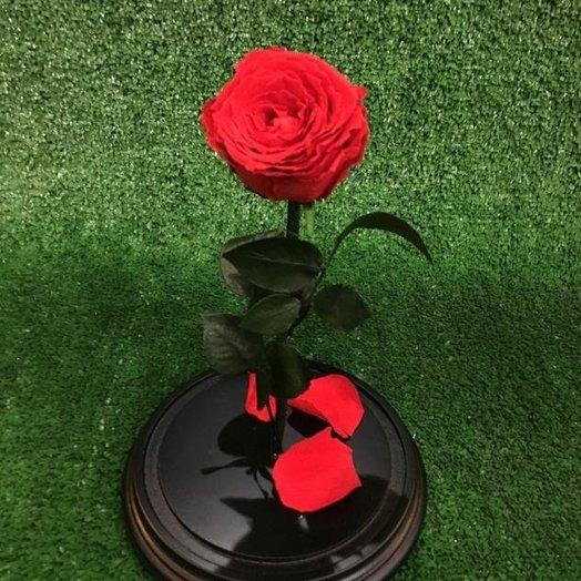 Долговечная живая роза в колбе: букеты цветов на заказ Flowwow