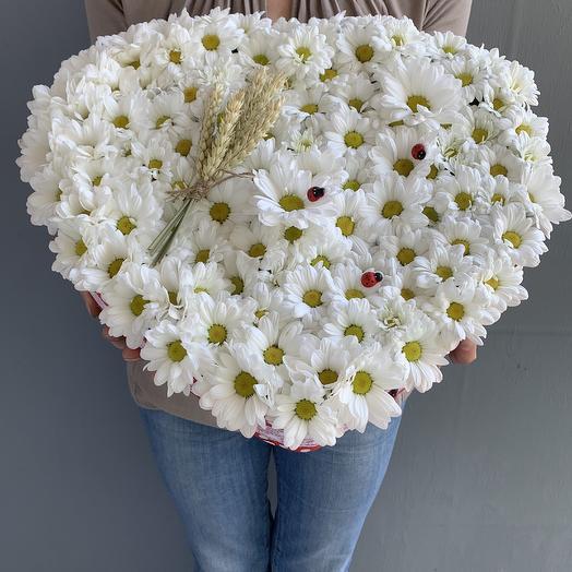 Огромное сердце с ромашковой хризантемой: букеты цветов на заказ Flowwow