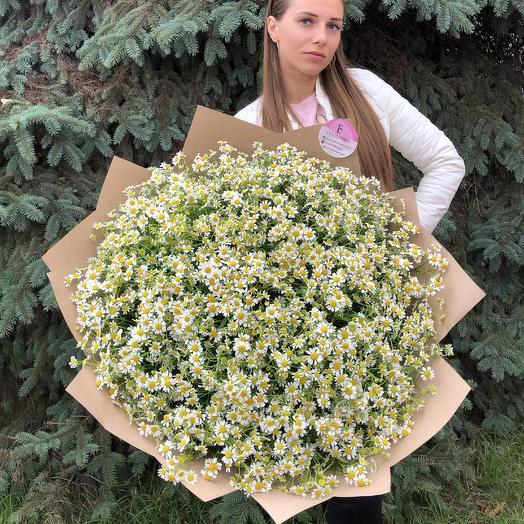 75 ромашек: букеты цветов на заказ Flowwow