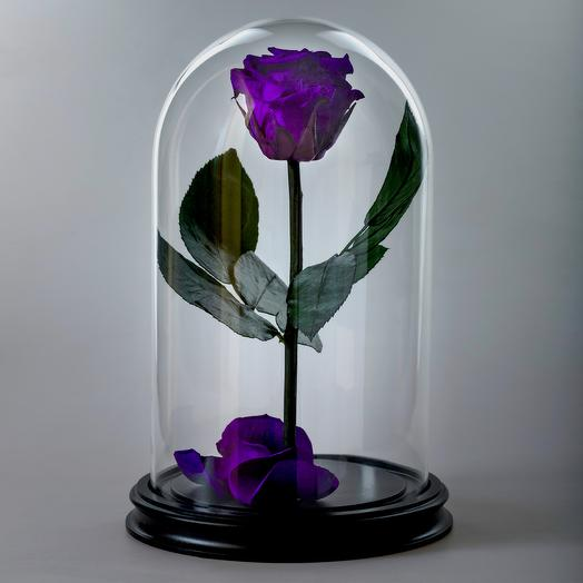 Роза в колбе фиолетовая премиум: букеты цветов на заказ Flowwow