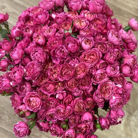 Роза-пион
