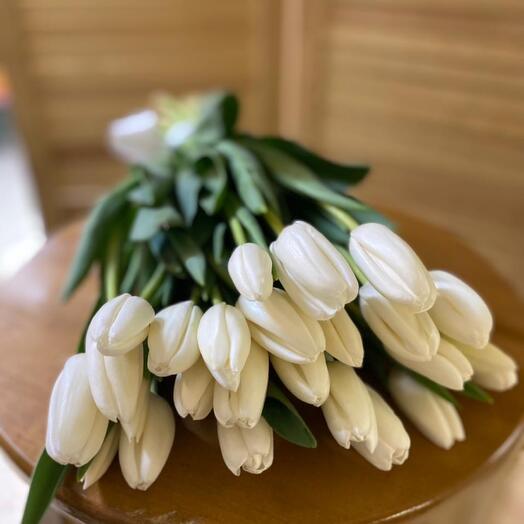 Тюльпан 25