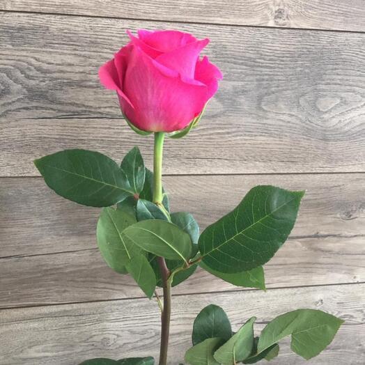 Роза пинкфлрйд