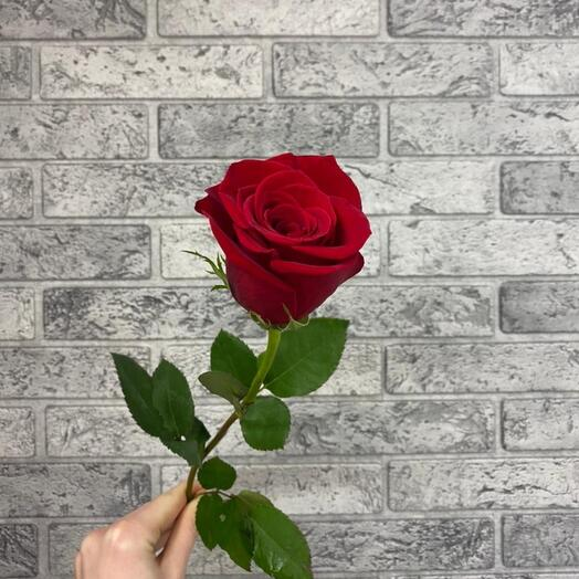 Роза VIP Premium Колумбия 50см