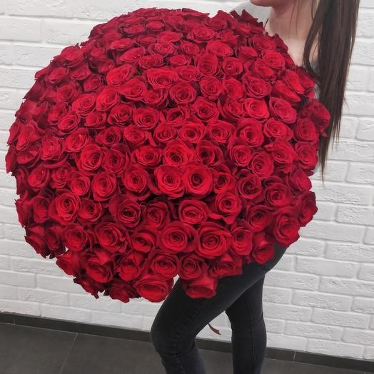 201 роза Фридом