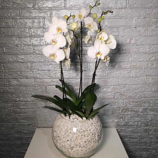 Прекрасные орхидеи: букеты цветов на заказ Flowwow