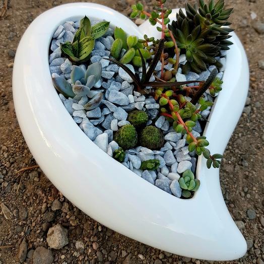 Сердце с суккулентами: букеты цветов на заказ Flowwow