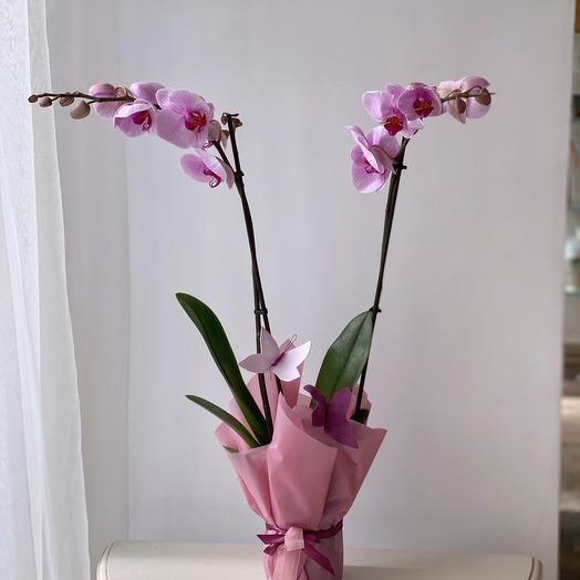 Орхидея 2 ст. с бабочками