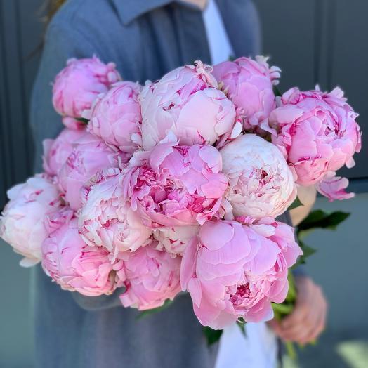 15 Pink Peonies