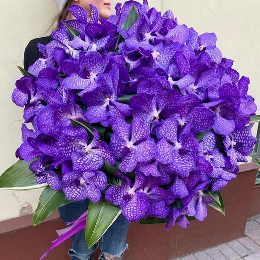 101 орхидея «Ванда»