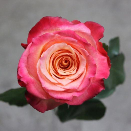 Роза Эквадор Кабарет