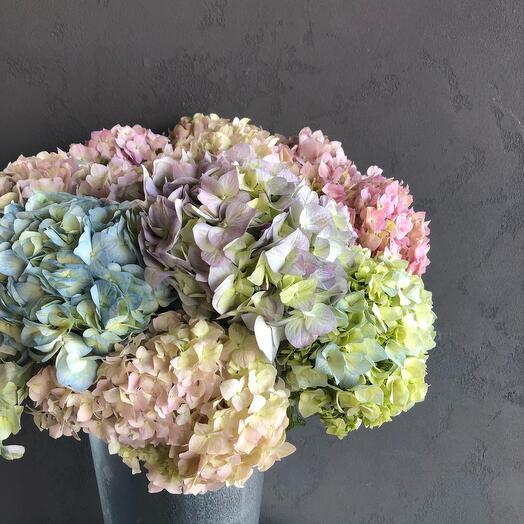 Hydrangeas in a flowerpot