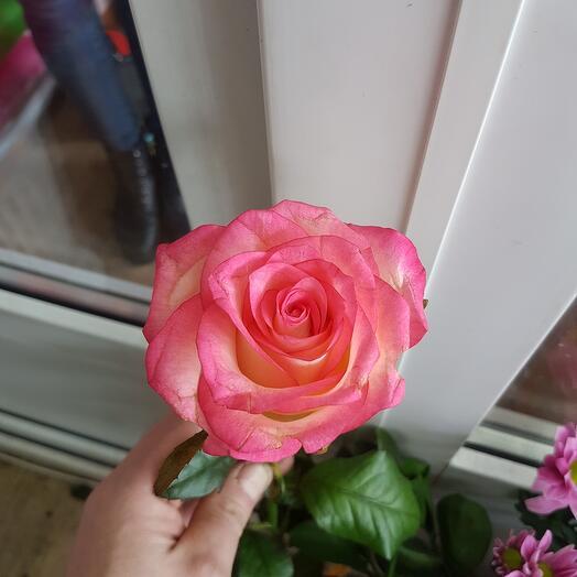 Роза Джумилия 80 см