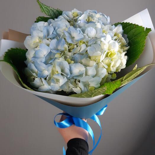 Гортензия голубая Mono