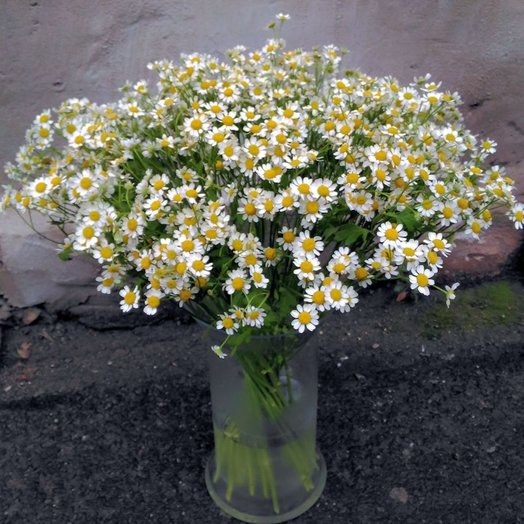 25 ромашек (Букет 280): букеты цветов на заказ Flowwow