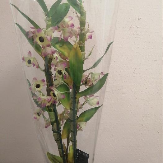 Дендробиум: букеты цветов на заказ Flowwow