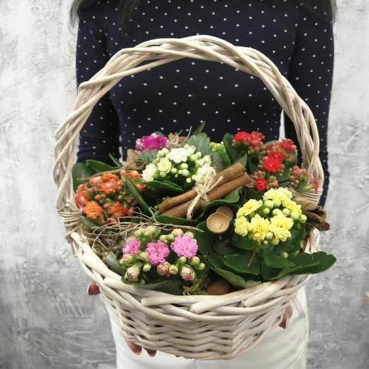 Яркая корзина с каланхое: букеты цветов на заказ Flowwow