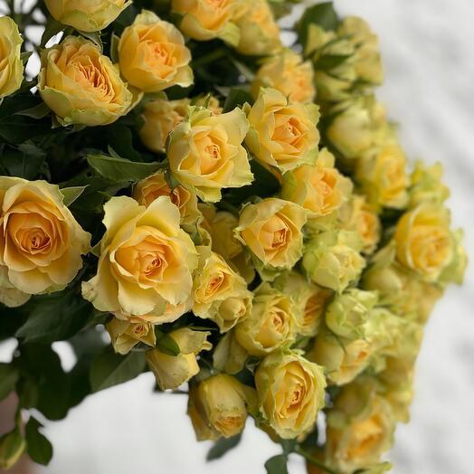 Роза кустовая Bondolero