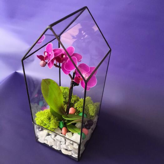 Мини орхидея в стеклянной форме