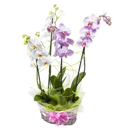 Basket of phalaenopsis orchids: flowers to order Flowwow