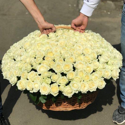 Корзины с цветами.  Белые Розы. 301 роза. N219