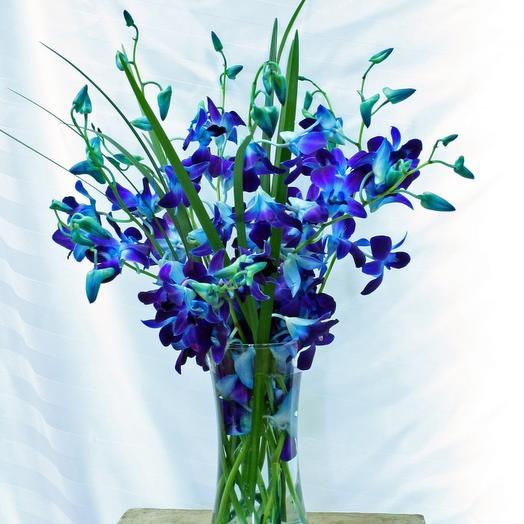 Букете, купить букет с орхидея дендробиум синяя