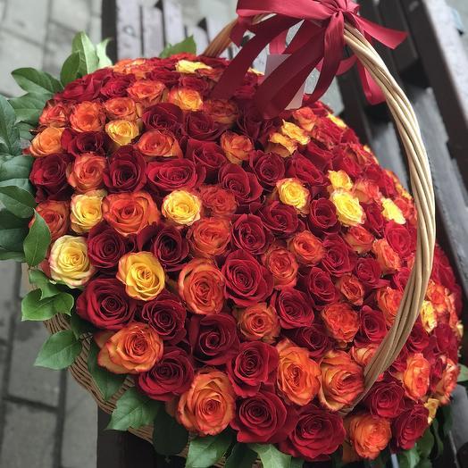 151 роза премиум в плетённой корзине