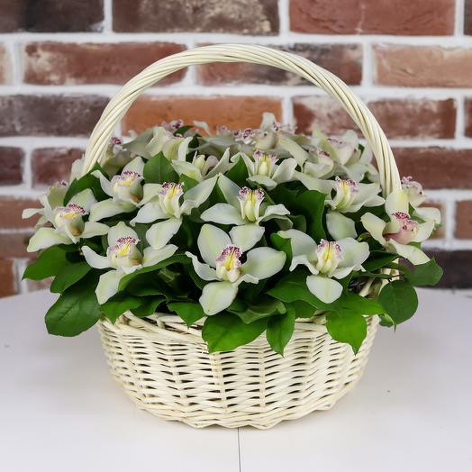 Корзина из 25 белых орхидей. N831