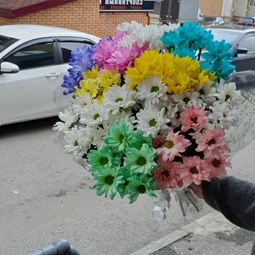 Цветная Хризантема