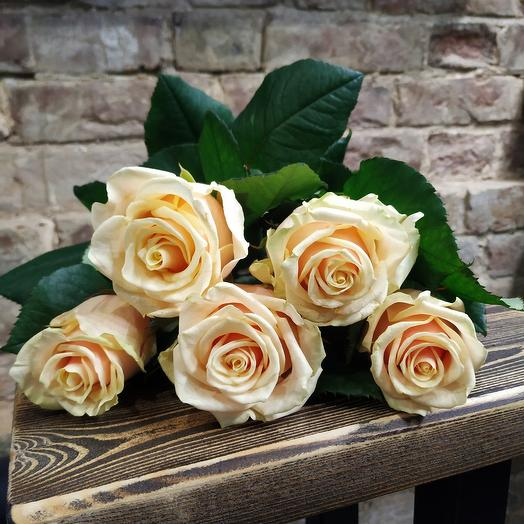 Роза Талея 5