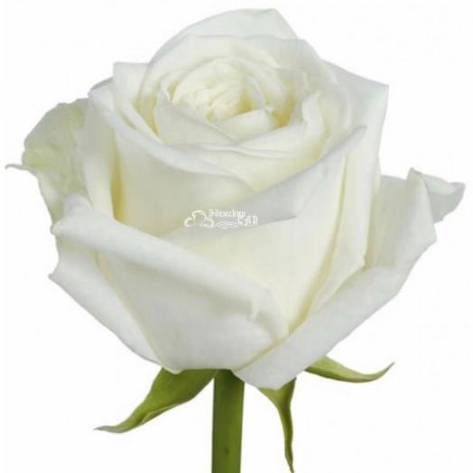 Роза(60см)