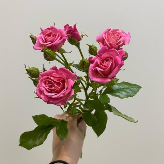 Кустовая Роза Лиана 60 см