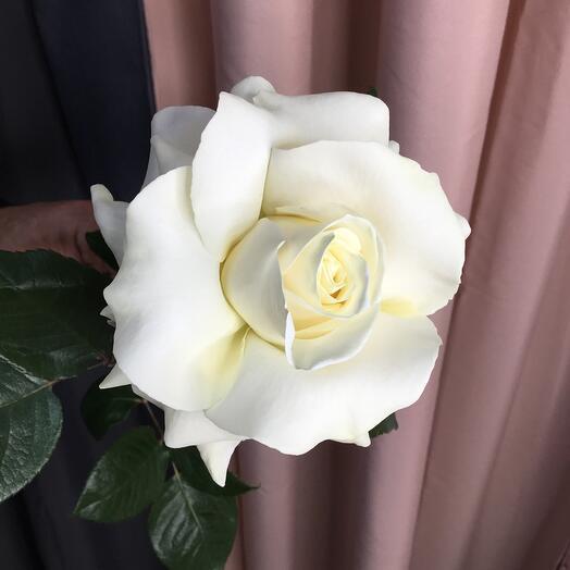 Развёрнутая Роза Эквадор  70